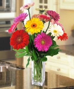 Great Gerberas by George Thomas Florist